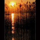 Canne al tramonto