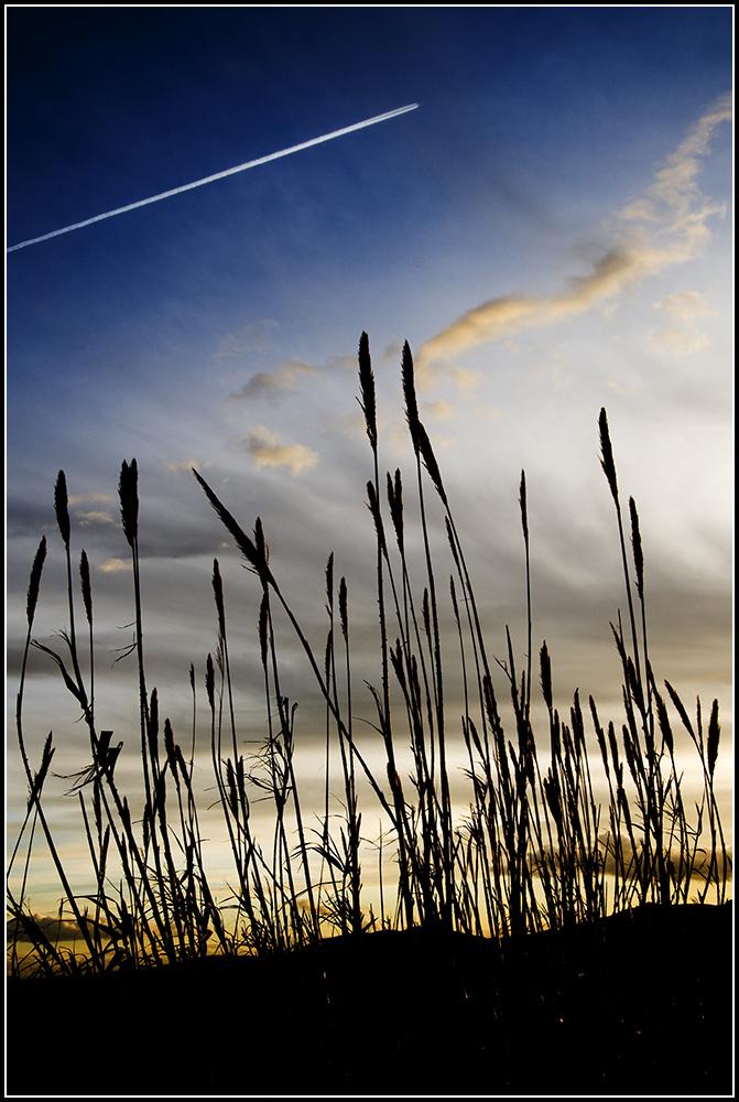Canne al tramonto ( Castelluccio ..... dei Sauri )