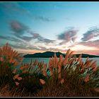 canne al vento siamo-colori del mattino