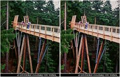 Canopy Trail 3D