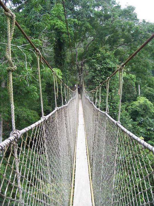 Canopy Walk in Ghana/Kakum