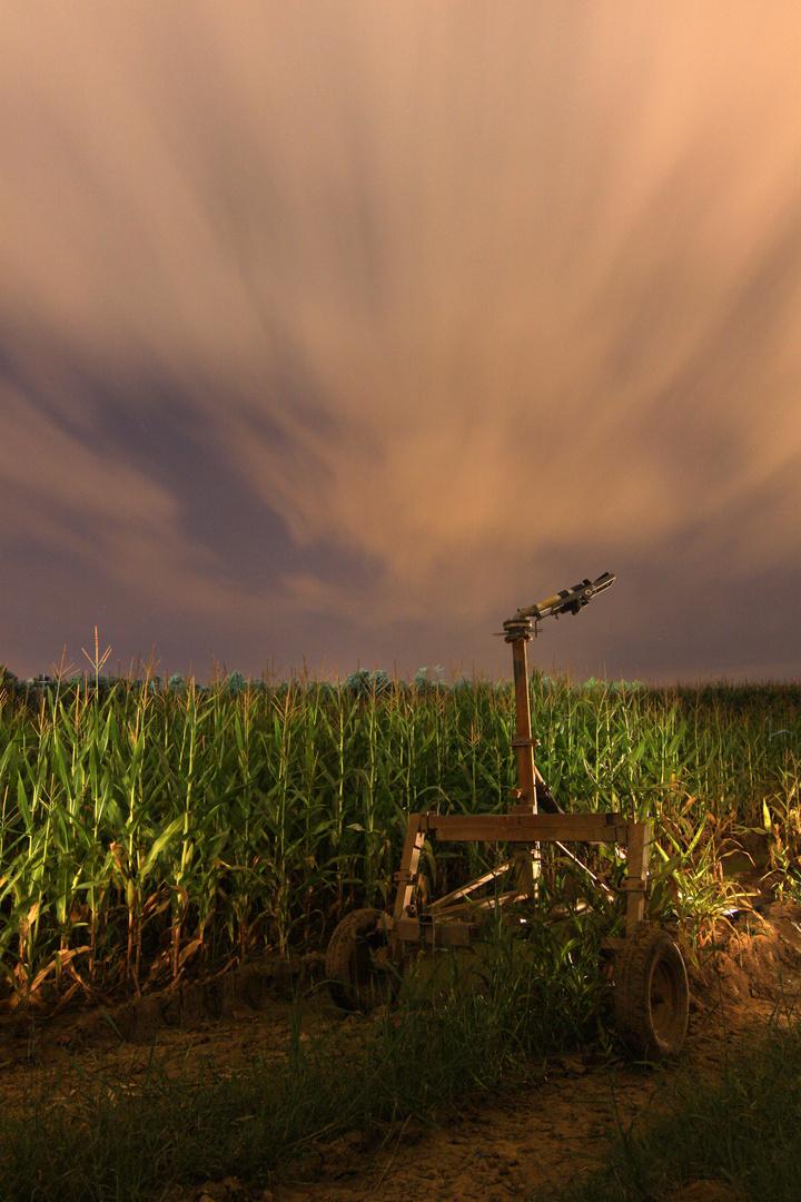 Canps de blat