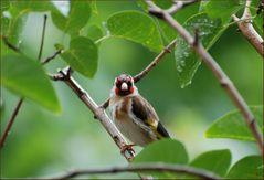 Cantando bajo la lluvia # Singing in the rain