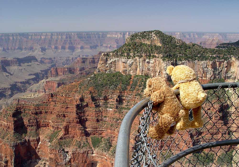 Canyon Bears at North Rim