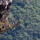 Canyon Fortaleza - SC