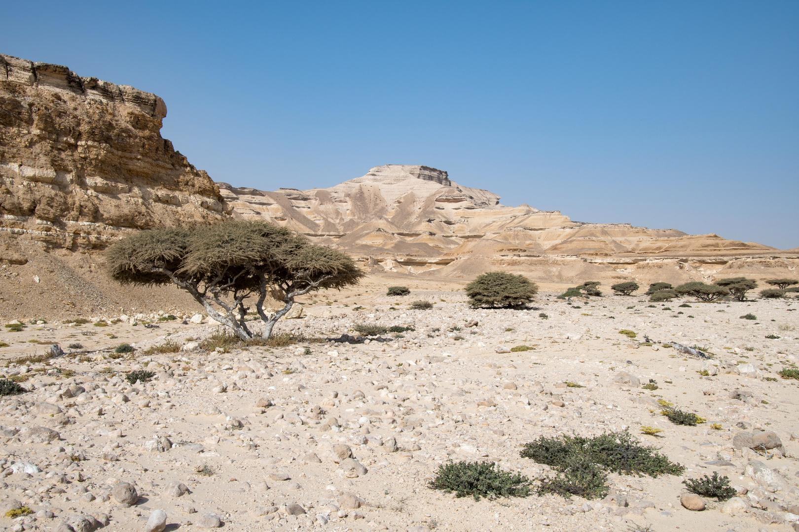 Canyon Shuaymiah