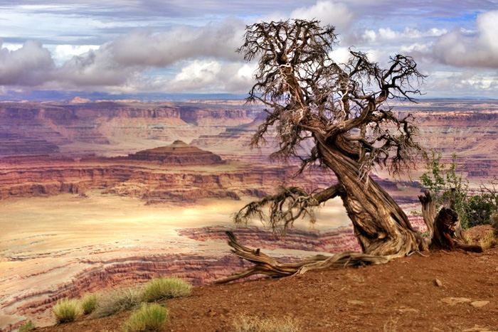 Canyonlands - Dead Horse Point