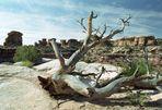 Canyonlands NP - Needles District
