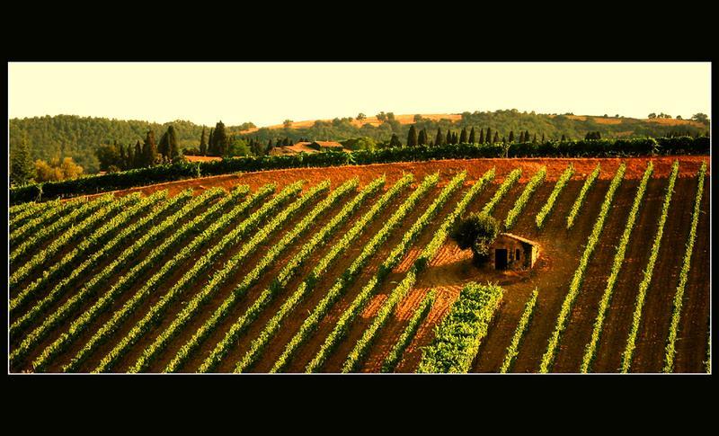capanna del vino