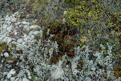 Cape Agulhas Flower Power