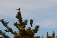 Cape Cod Vogel