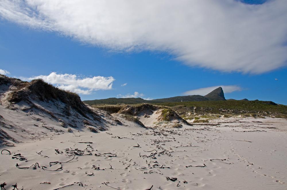 Cape Peninsula's Wild Coast