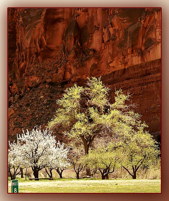 Capitol Reef NP....
