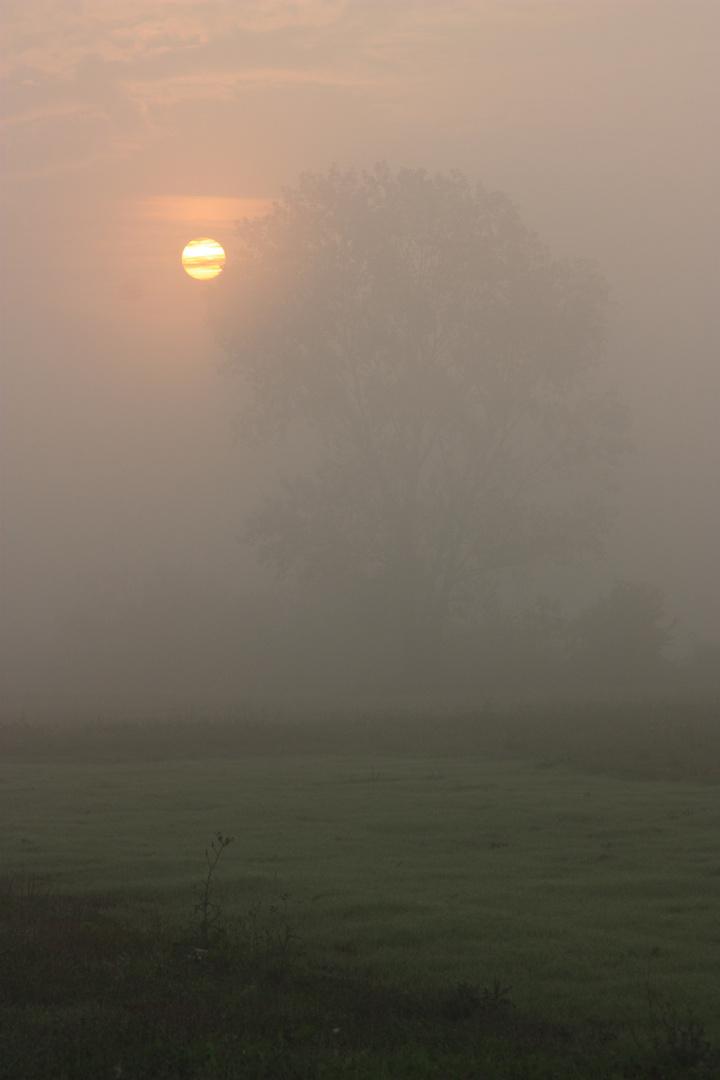 capolino tra la nebbia