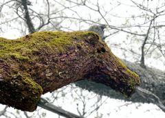 Capricho del árbol