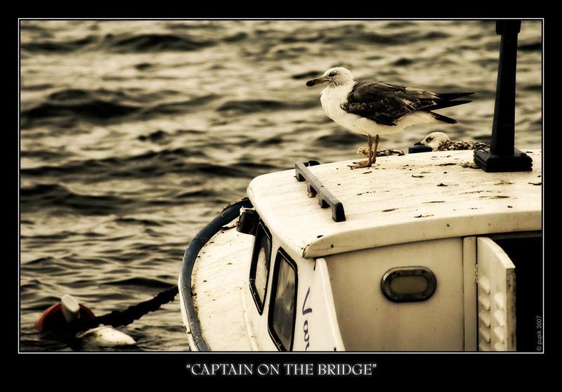 captain on the bridge