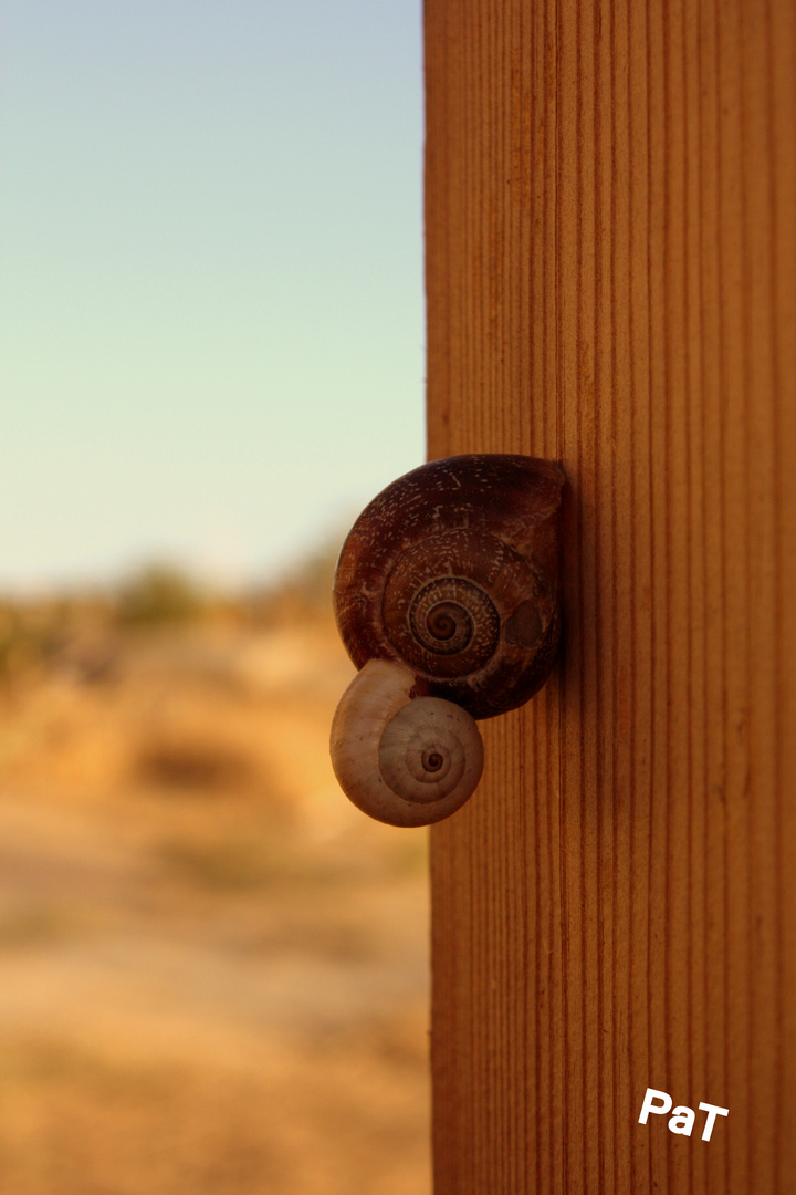 Caracol-a