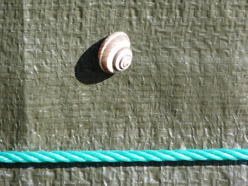 caracol y verde