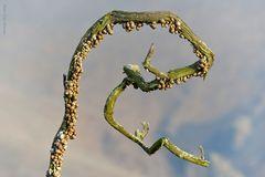 Caracoles en temporada seca