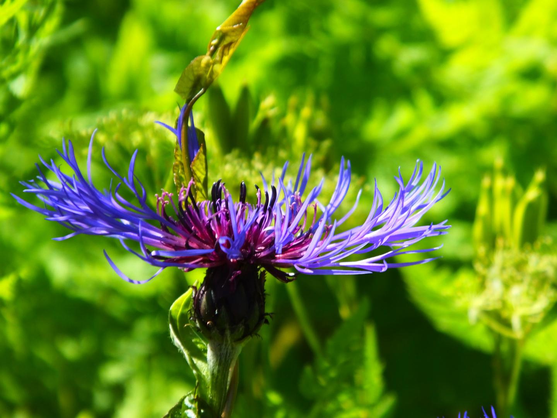 Cardiff Flowers