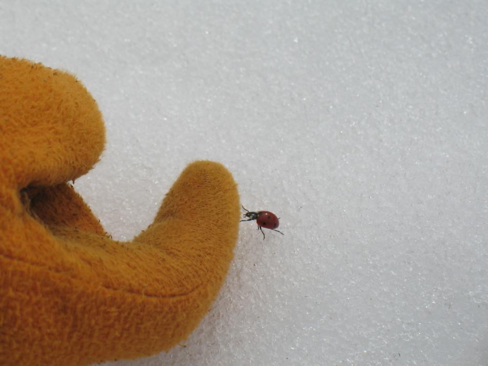 Carezze sulla neve