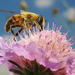 Carica di polline