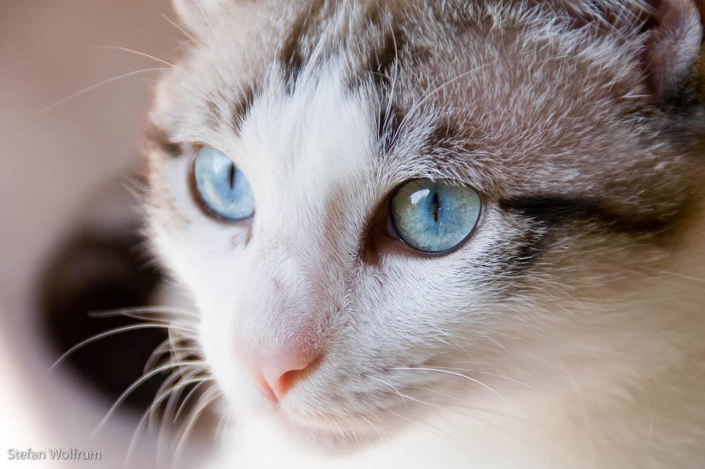 Cariños blauen Augen