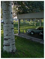 cars and trees #5