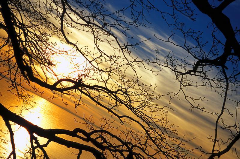CARTIER Sunset