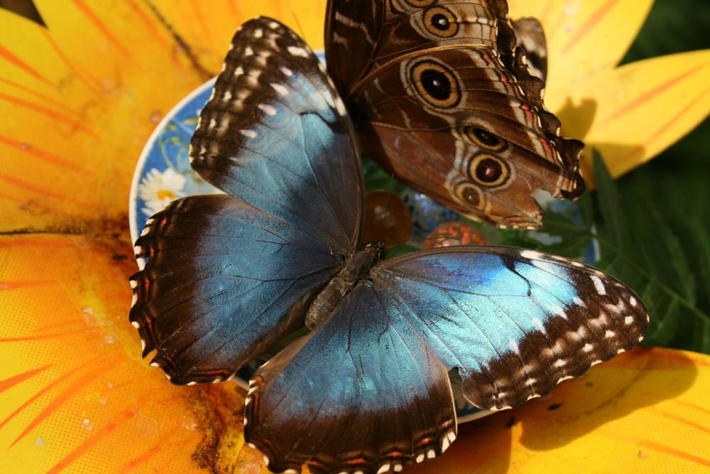Casa delle farfalle - bordano