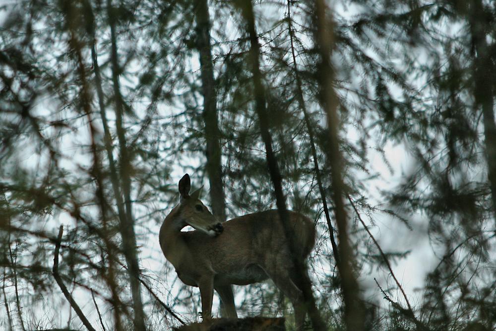 Cascades - Washington State