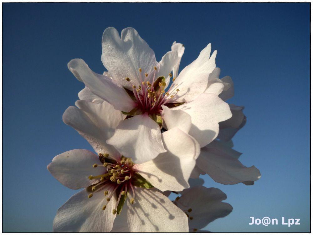 Casi, casi primavera