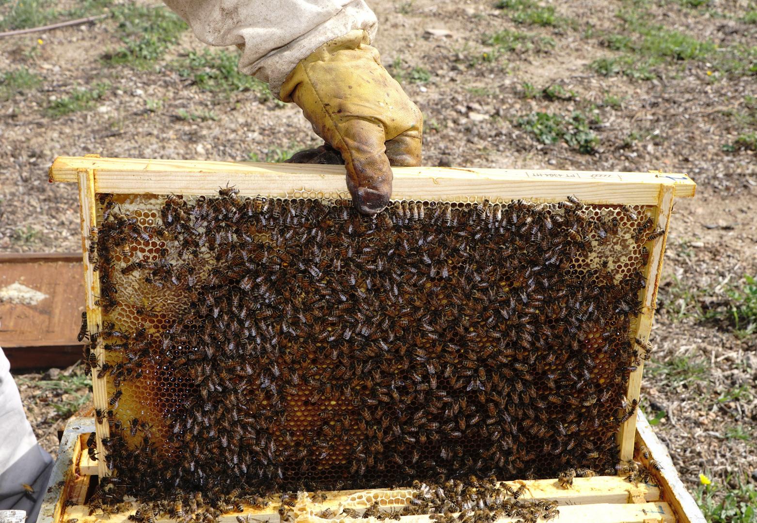 Casier de ruche