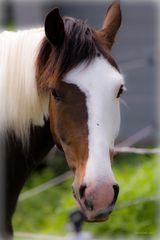 Casper - ein Pferd