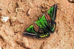 CASTALIA GREEN MANTLE, CARIA CASTALIA