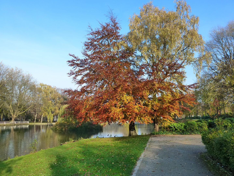 Castroper Stadtgarten im Herbst