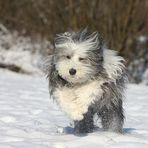 Casy´s Schneefreude !