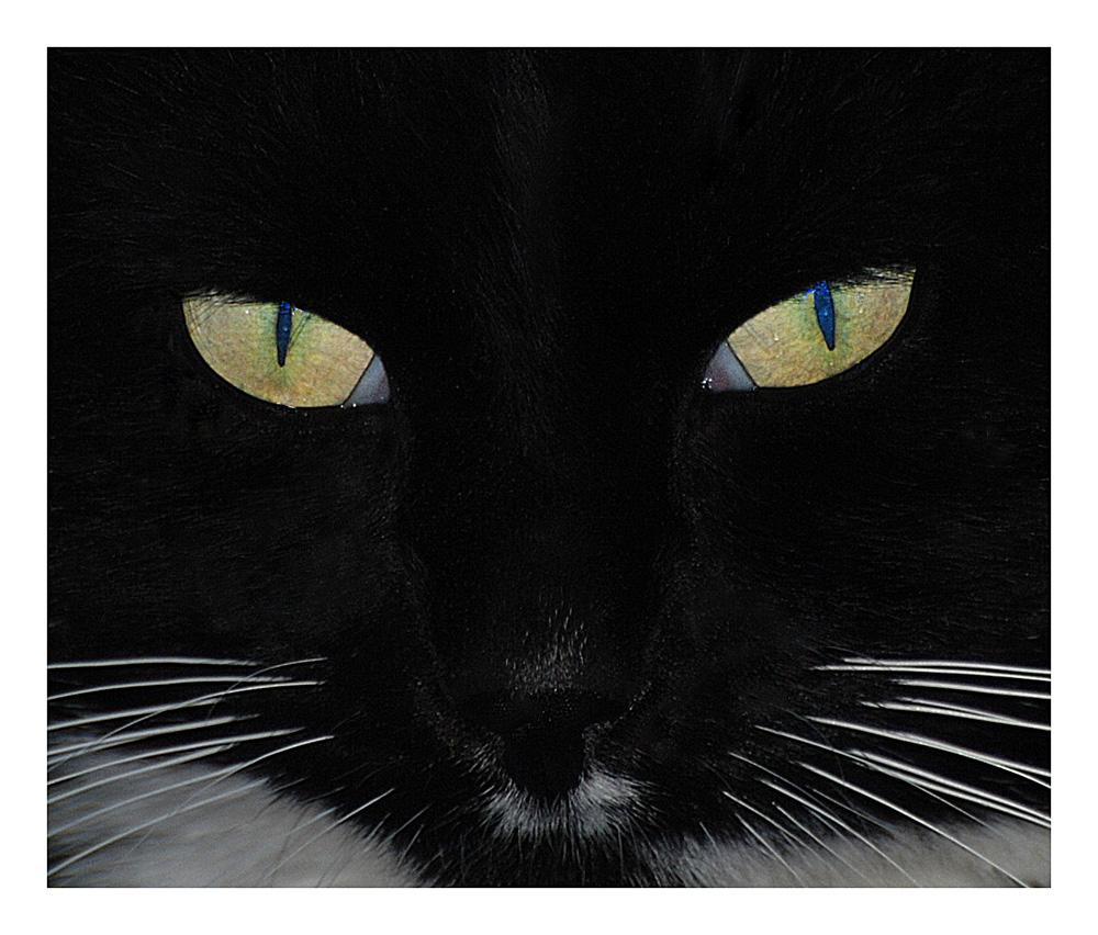...cat...