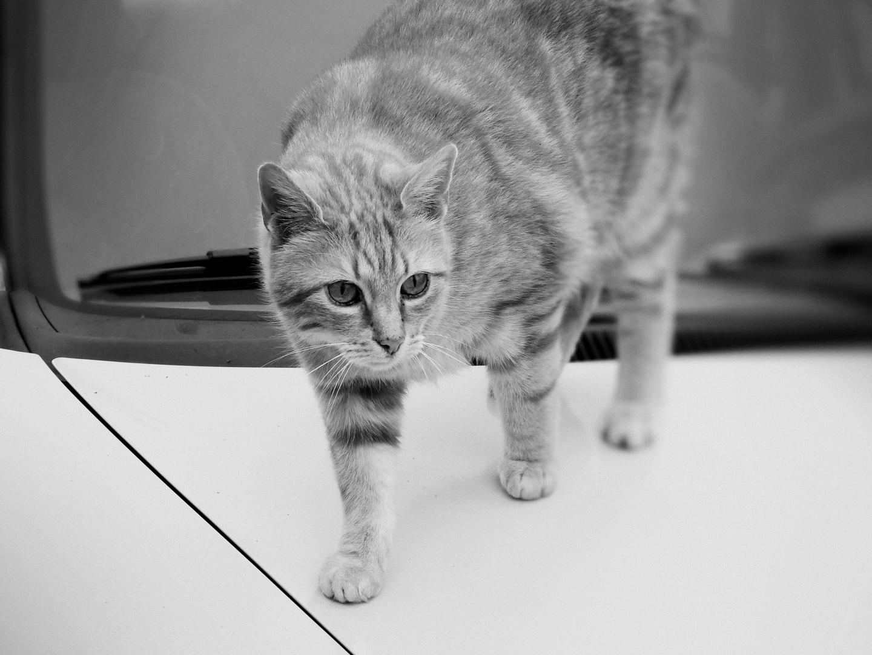 ... cat