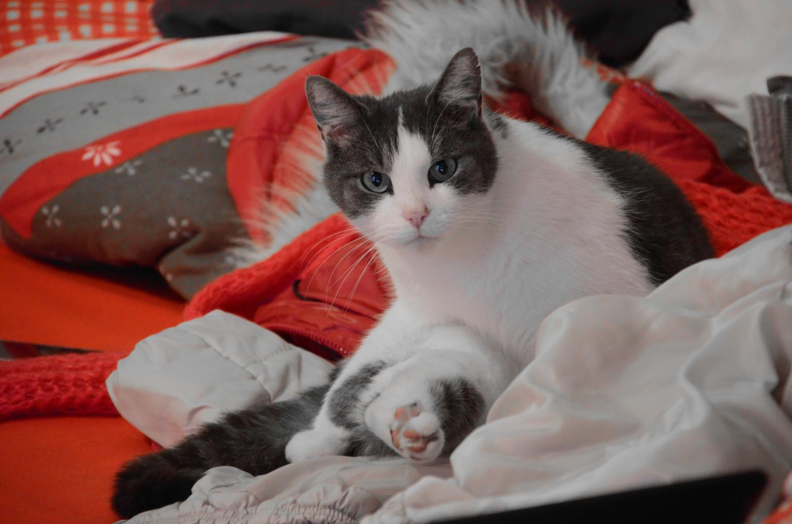 #cat #effect #kamera #nikon