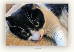 cat - f/2.8