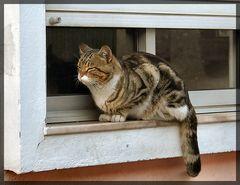 Cat Félix