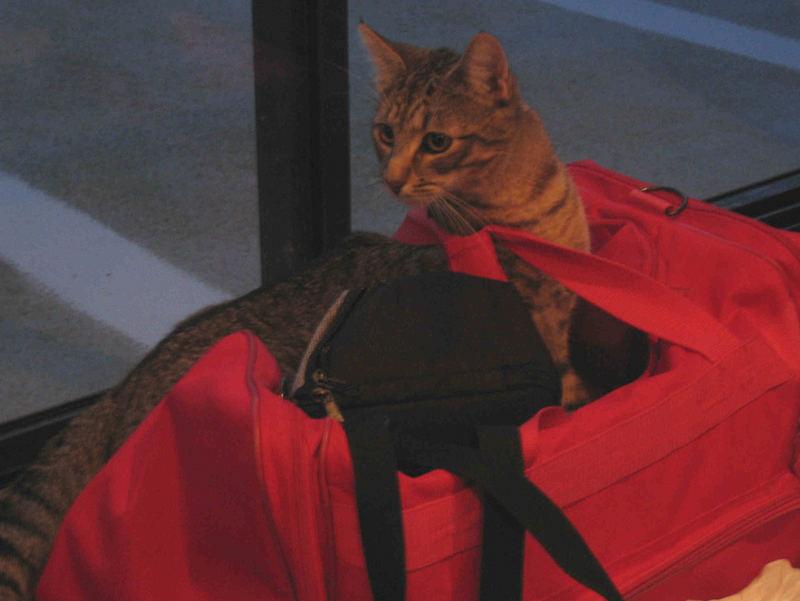 Cat in a Bag....