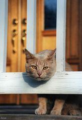 Cat-in-Gate