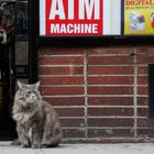Cat in Manhattan