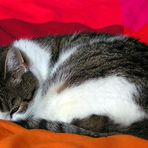 --- cat in red bed ---