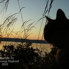 Cat in Sunrise