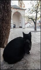 Cat in the Mosque I