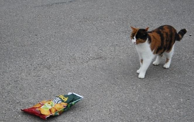 cat like chips