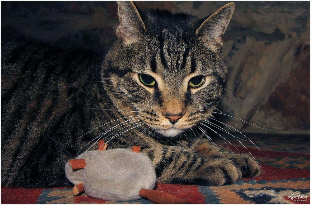 Cat + Mouse